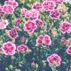 Flores para el Día de la Madre en Sanchez Romero
