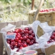 Refréscate, cuídate y disfruta con las mejores cerezas del mercado